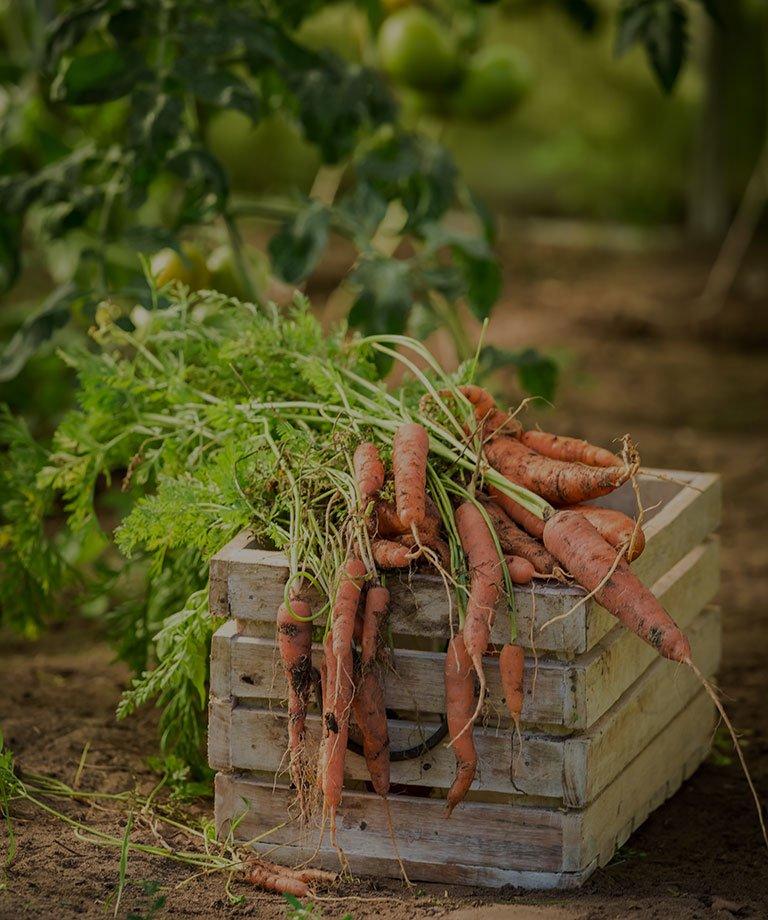 cocina casera en Tudela de Duero platos con zanahorias de la huerta